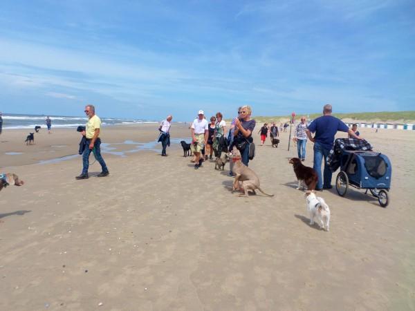 Texel, vakantie op Texel met honden, waddeneiland, hondvriendelijke vakantiebestemming, roedelwandeling Texel
