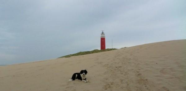 Texel, vakantie op Texel met honden, waddeneiland, hondvriendelijke vakantiebestemming