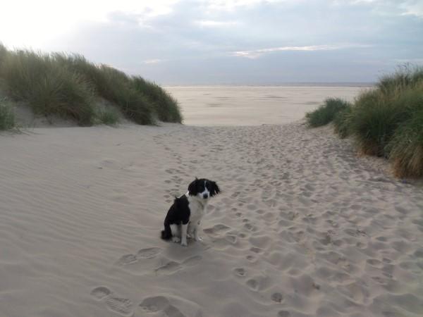 Texel, vakantie op Texel met honden, waddeneiland, hondvriendelijke vakantiebestemming, vakantie met hond