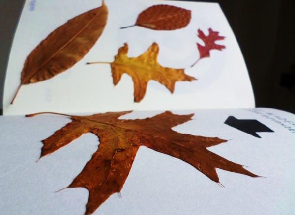 Dare to Wreck - Wreck this Journal - Plak bladeren en andere gevonden voorwerpen