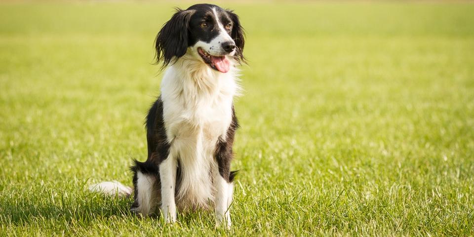 Vrijwilligerswerk voor je hond, met hond zorginstellingen bezoeken, zorgdieren, bezoekhonden