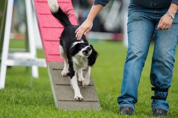 """Mijn """"gevaarlijke"""" hond op de kattenloop (Foto: Erich Snijder)"""