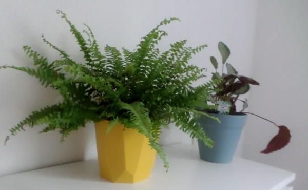 De leukste betaalbare bloempotjes voor binnen, leuke bloempotten voor binnen, kleine bloempotjes, grote bloempotten voor binnen, plantenpotten, kweekpotjes