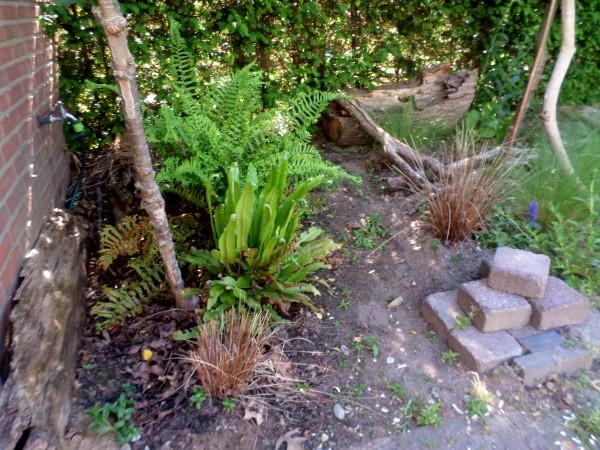 Een natuurlijke en diervriendelijke tuin maken, vlindertuin, vogeltuin, bloementuin voor bijen en insecten