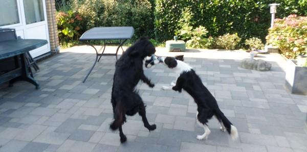 Plog van Sproet de hond