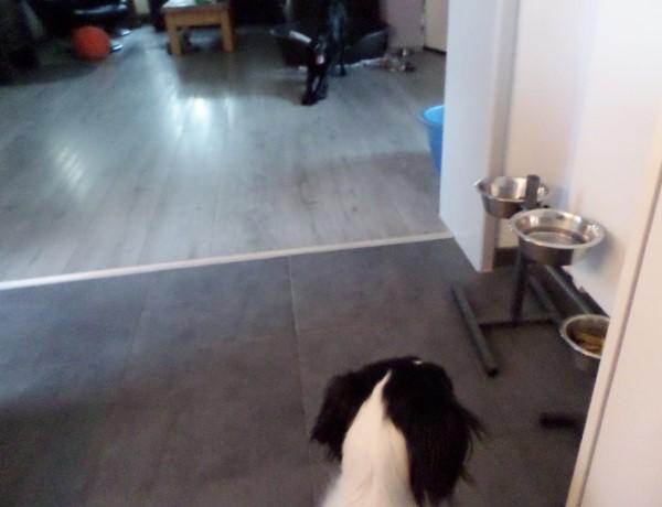Plog van Sproet de hond (2)