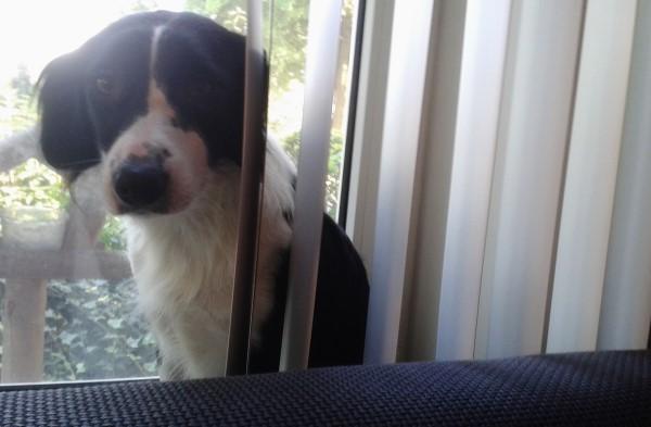Plog van Sproet de hond (21b)