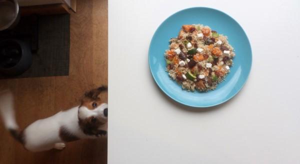 Puppy Mango staat kwispelend bij een bord met couscous met pompoen uit de oven, aubergine, courgette en feta