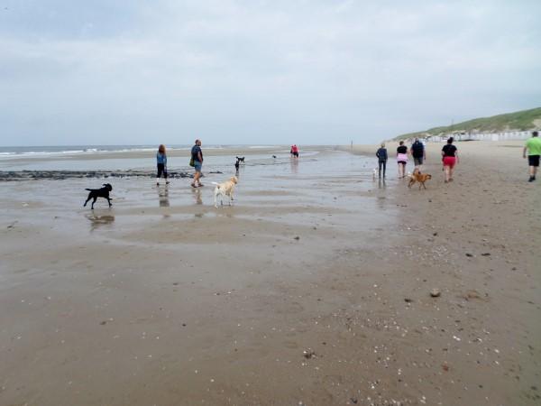 Vakantie op Texel, waddeneiland, praktische tips, aanraders, roedelwandeling, honden, met hond naar Texel