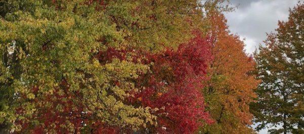 bomen in de herfst - een deel is al rood en oranje gekleurd